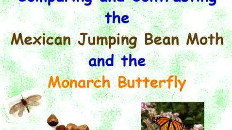 Thumbnail for entry Comparing and Contrasting Jumping Bean Moths and Monarch Butterflies