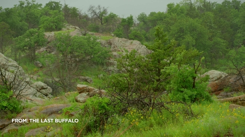 Thumbnail for entry Native Americans Saw Buffalo as More Than Just Food