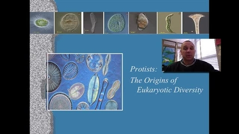 Thumbnail for entry Protists