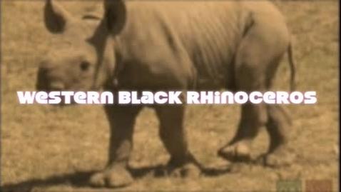 Thumbnail for entry Western Black Rhino