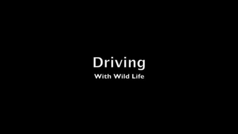 Thumbnail for entry Driving With Wild Life