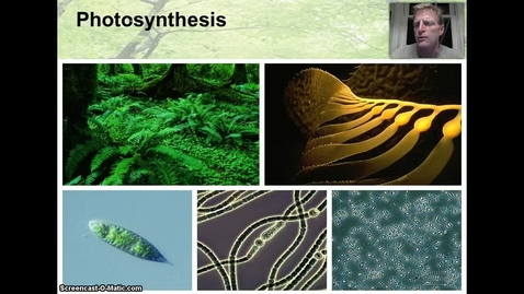 Thumbnail for entry Light & Photosynthesis