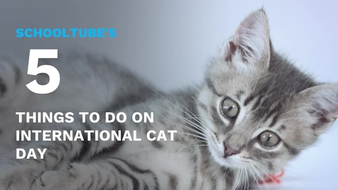 Thumbnail for entry SchoolTube's 5 Things to do on International Cat Day