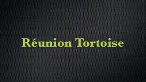 Thumbnail for entry Reunion tortoise-Stallsmith,bates-per1