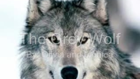 Thumbnail for entry The Grey Wolf By: Olivia and Monica