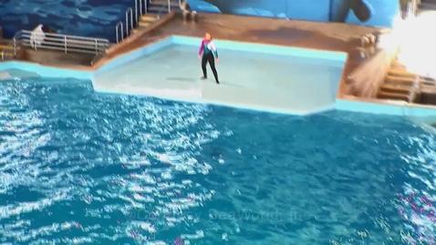 Thumbnail for entry Corrales Seaworld Video