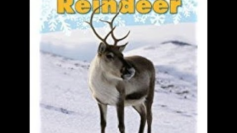 Thumbnail for entry Reindeer - A Day in the Life - Stories for Kids