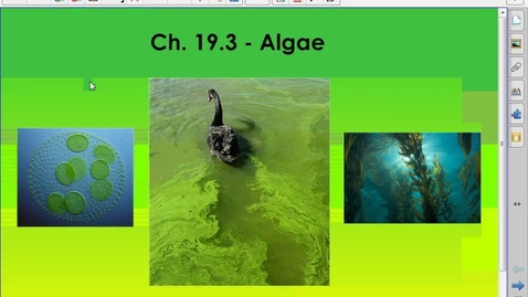 Thumbnail for entry algae