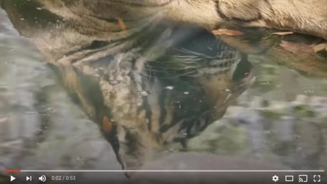 Thumbnail for entry Bengal Tiger Reserve Introduction