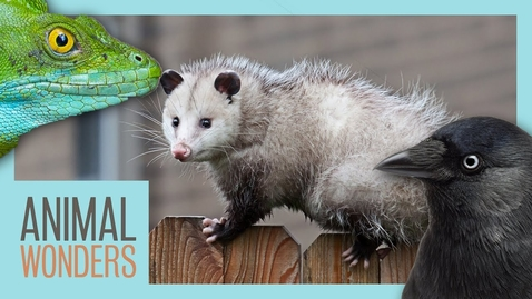 Thumbnail for entry 9 Bizarre Animal Adaptations