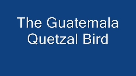 Thumbnail for entry The Endangered Quetzal  by Kyle