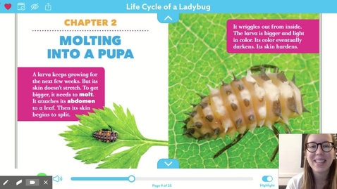 Thumbnail for entry Life Cycle of a Ladybug Chapter 2