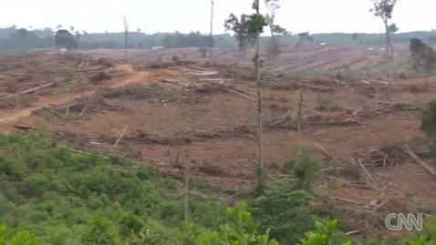 Thumbnail for entry CNN Explains Deforestation