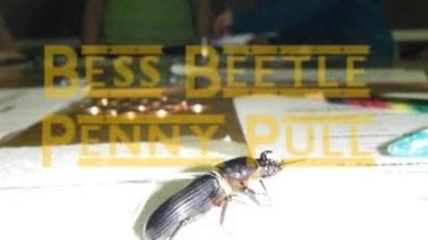 Thumbnail for entry Bess Beetles - Denton