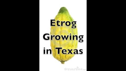 Thumbnail for entry Etrog Lulov Sukkot in Texas