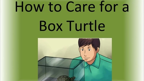 Thumbnail for entry How to Care for a Box Turtle