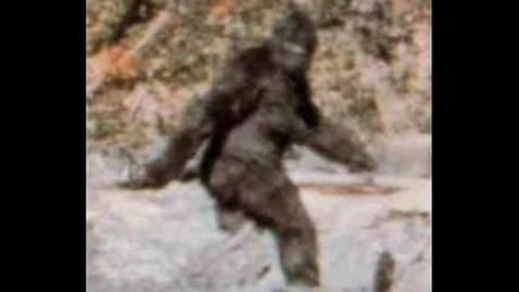 Thumbnail for entry BIGFOOT IS REAL