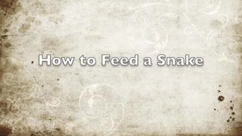 Thumbnail for entry How to Feed My Snake How-To Project
