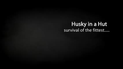 Thumbnail for entry HUSKY IN A HUT, by Ben Baglio