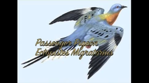 Thumbnail for entry Passenger Pigeon pd.4