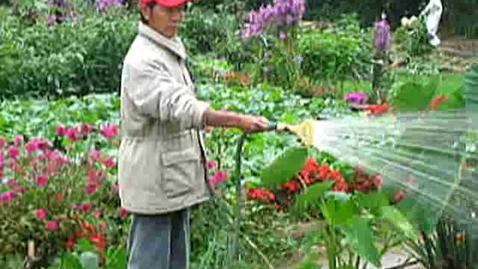 Thumbnail for entry Korean Gardens 16