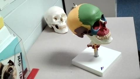 Thumbnail for entry Skull Lesson