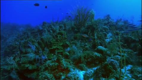 Thumbnail for entry Wild Carribean (3/3)