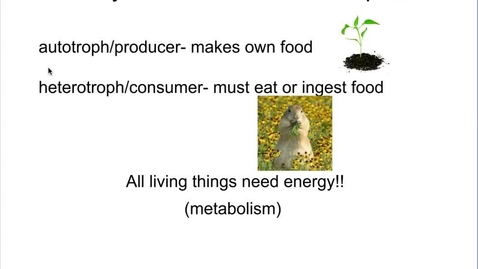 Thumbnail for entry Photosynthesis and Cellular Respiration