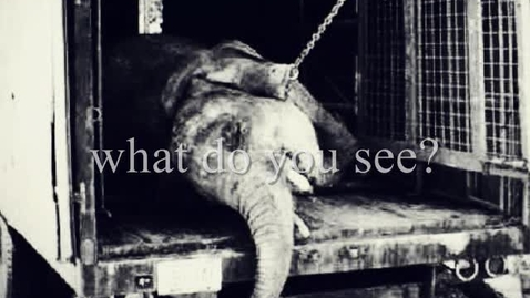 Thumbnail for entry Lara Pham - PSA Animal Cruelty