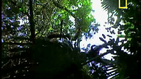 Thumbnail for entry Tiniest Lemur (AKA King Kong in my Pocket)