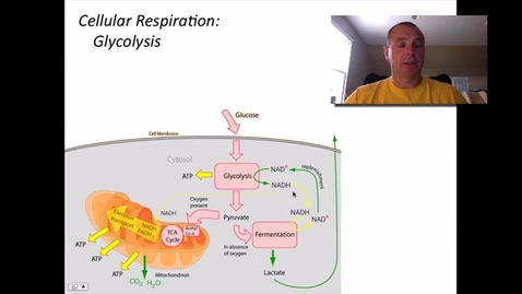 Thumbnail for entry Glycolysis