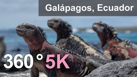 Thumbnail for entry Animals of Galápagos archipelago, Ecuador. 360 video in 5K