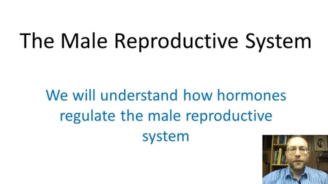 Thumbnail for entry Male Reproductive System