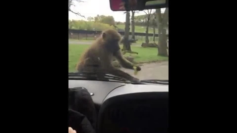 Thumbnail for entry Early Learners visit Knowsley Safari Park