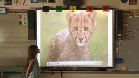 Thumbnail for entry Elaina Wirtz Cheetah research project