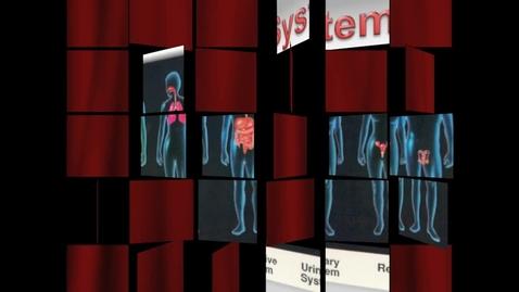 Thumbnail for entry Organ System