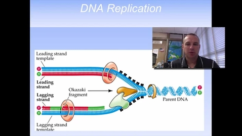Thumbnail for entry DNA Replication