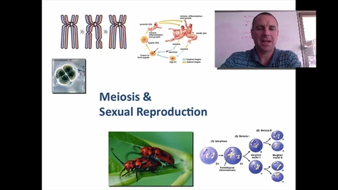 Thumbnail for entry Meiosis