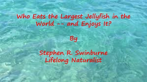 Thumbnail for entry Who Eats the Largest Jellyfish in the World -- and Enjoys It? by Stephen  R. Swinburne, Lifelong Naturalist