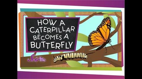 Thumbnail for entry How a Caterpillar Becomes a Butterfly