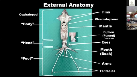 Thumbnail for entry Part 2 - Northwood ES Virtual Squid Dissection - Burton 4-H Center 2.24.2021