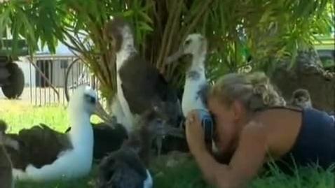 Thumbnail for entry Albatross video