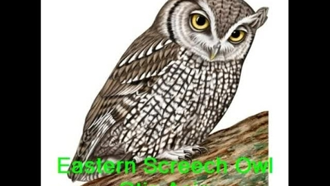 Thumbnail for entry The Eastern Screech Owl