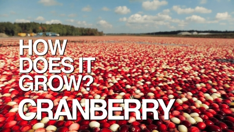 Thumbnail for entry CRANBERRY | How Does It Grow?