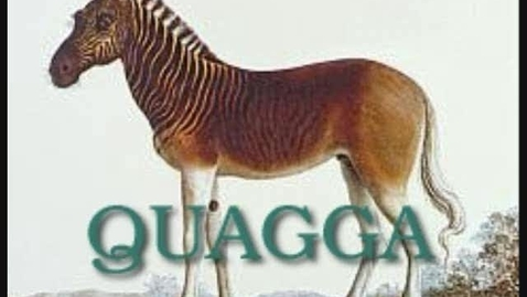 Thumbnail for entry Quagga by Austin and Cathy