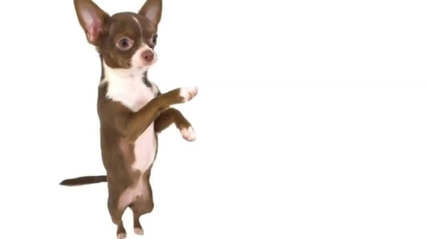 Thumbnail for entry Chuy the Amazing Chihuahua of Chemistry
