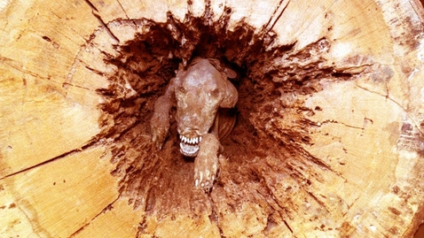 Thumbnail for entry Loggers Couldn't Believe What They Found In The Middle Of A Tree