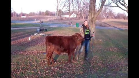 Thumbnail for entry My Steer