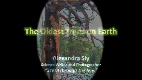 Thumbnail for entry The Oldest Trees on Earth by Alexandra Siy, STEM Through the Lens