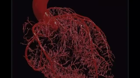 Thumbnail for entry Blood Vessels pt 3 - Blood Flow